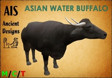 Asian Water Buffalo (Bubalus bubalis)