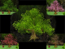 Wide Trees Pack - Mesh - Full Perm