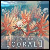 [europa] Staghorn Coral