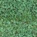 Texture: Clover Grass *SEAMLESS* *FULL PERM*