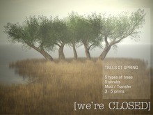 [we're CLOSED] trees 01 spring - transfer