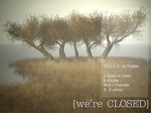 [we're CLOSED] trees 01 autumn - transfer
