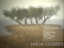 [we're CLOSED] trees 01 summer - transfer