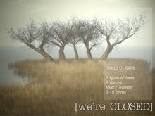 [we're CLOSED] trees 01 bare - transfer
