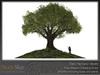 Skye four season oak 7