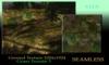Seamless Realistic Grass terrain Texture tga 1024