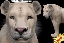 Complete Avatar White Lioness *Mesh*