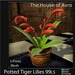 Potted Tiger Lilies - Mesh - 3 Prims Gothic Furniture