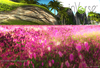 inVerse® - Square pink meadow
