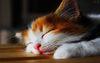 *~Cat Purr Typer~*