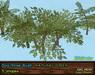 Dogrose vendor nat green