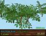 Dogrose vendor viv green