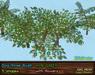 Dogrose vendor viv green flowers