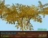 Dogrose vendor yellow