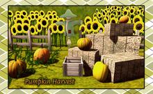 {XO} Full Perm Pumpkin Harvest