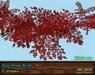 Dogrose vendor red