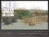Wild grass collection 5