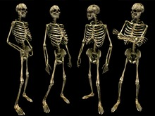 Skeleton Avatar - Full Perm
