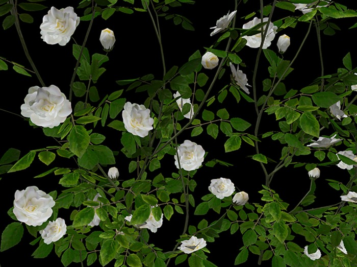 Climbing Rose White Pack - Mesh - Full Perm