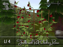 Trellis with red Climbing Roses MT
