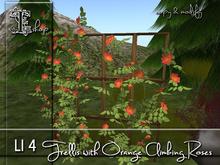Trellis with orange Climbing Roses MC
