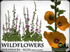 Flowers - WILD FLOWERS - Hollyhocks - Mixed Colours