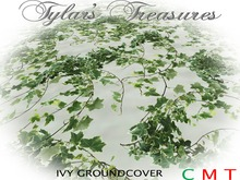 .:TT:.  IVY GROUNDCOVER BOXED