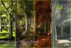 inVerse® Mesh_ Multiseason Woods Patch
