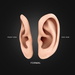 Ear display boards formal