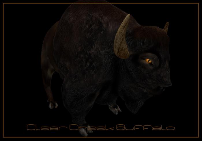 Clear Creek Buffalo