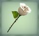 [AG] Rose - White Rose
