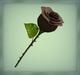 [AG] Rose - Black Rose