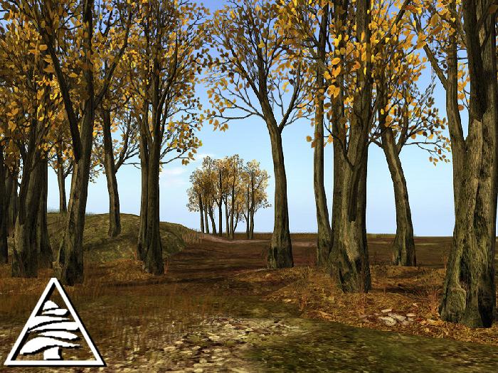 Beech forest - autumn - M/T
