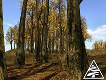Beech forest - autumn - C/M