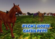 Pygmy Horse pet gacha! (pony, mare, etc)
