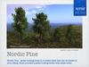Nordic pine main slm