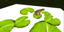 Animated Frog On Lily Pads     Mesh