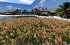 """1 prim full perm """"Low Lag Pale Tulips Field / Meadow"""" sculpt map, any plant texture"""