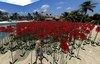 """1 prim full perm """"Low Lag High Red Flower Field / Meadow"""" sculpt map, any plant texture"""