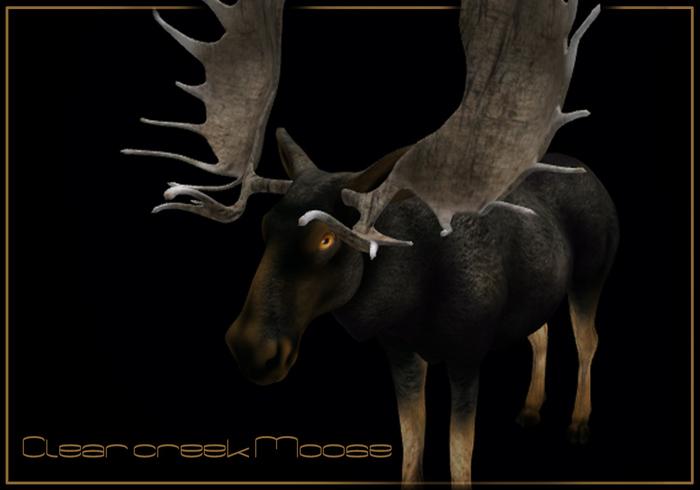 Clear Creek Moose