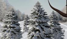 CJ Winter Trees with Snow 8 in 1 ~ only 1 Prim ~ copy + mody ~