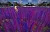 """1 prim full perm """"Low Lag Violet Flower Meadow / Grass Field"""" sculpt map, any plant texture"""
