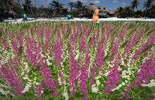 "2 LI ""Low Lag Fox Gloves Whitepink Meadow"" any plant texture (mod, copy)"