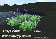 4 Sage plants with butterfly emitter ( 1 prim plants)