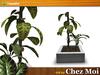 Sunshine potted plant