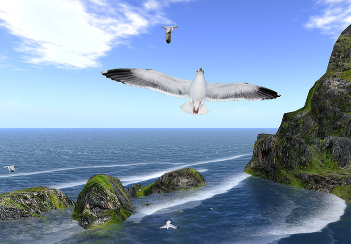 Group of 12 seagulls with sounds 5prims