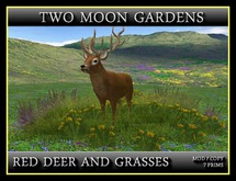 RED DEER WITH GRASSES*