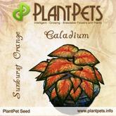 PlantPet Seed [Caladium *Sunburst Orange*]