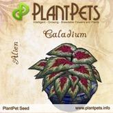 PlantPet Seed [Caladium *Alien*]