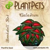 PlantPet Seed [Caladium *Bombshell Red*]
